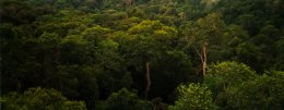 The tropical jungles of Brazil in the Amazon